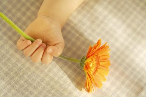 オレンジの花を持つ赤ちゃんの手