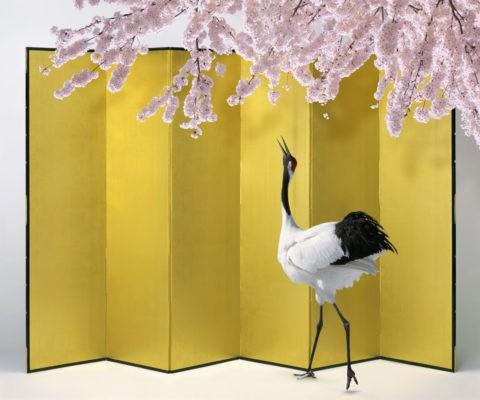 桜 タンチョウヅル ツル 金屏風 合成