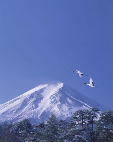 富士山 タンチョウヅル ツル 正月 合成