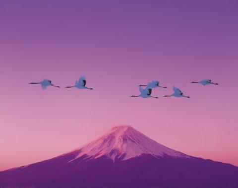 富士山 タンチョウヅル ツル 朝焼け 正月 合成