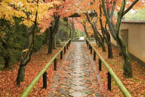 光悦寺 参道 石畳 落葉 青竹 道 雨上り 紅葉