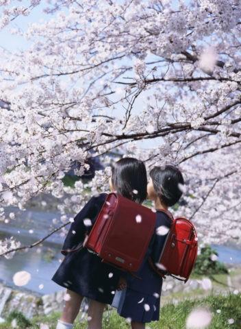 桜 子供 桜吹雪 花吹雪 散る 春 合成 ランドセル