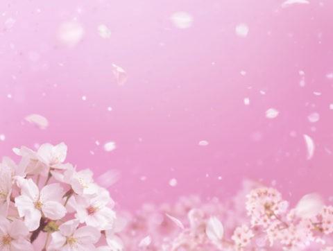 桜 散る ピンク 春 合成
