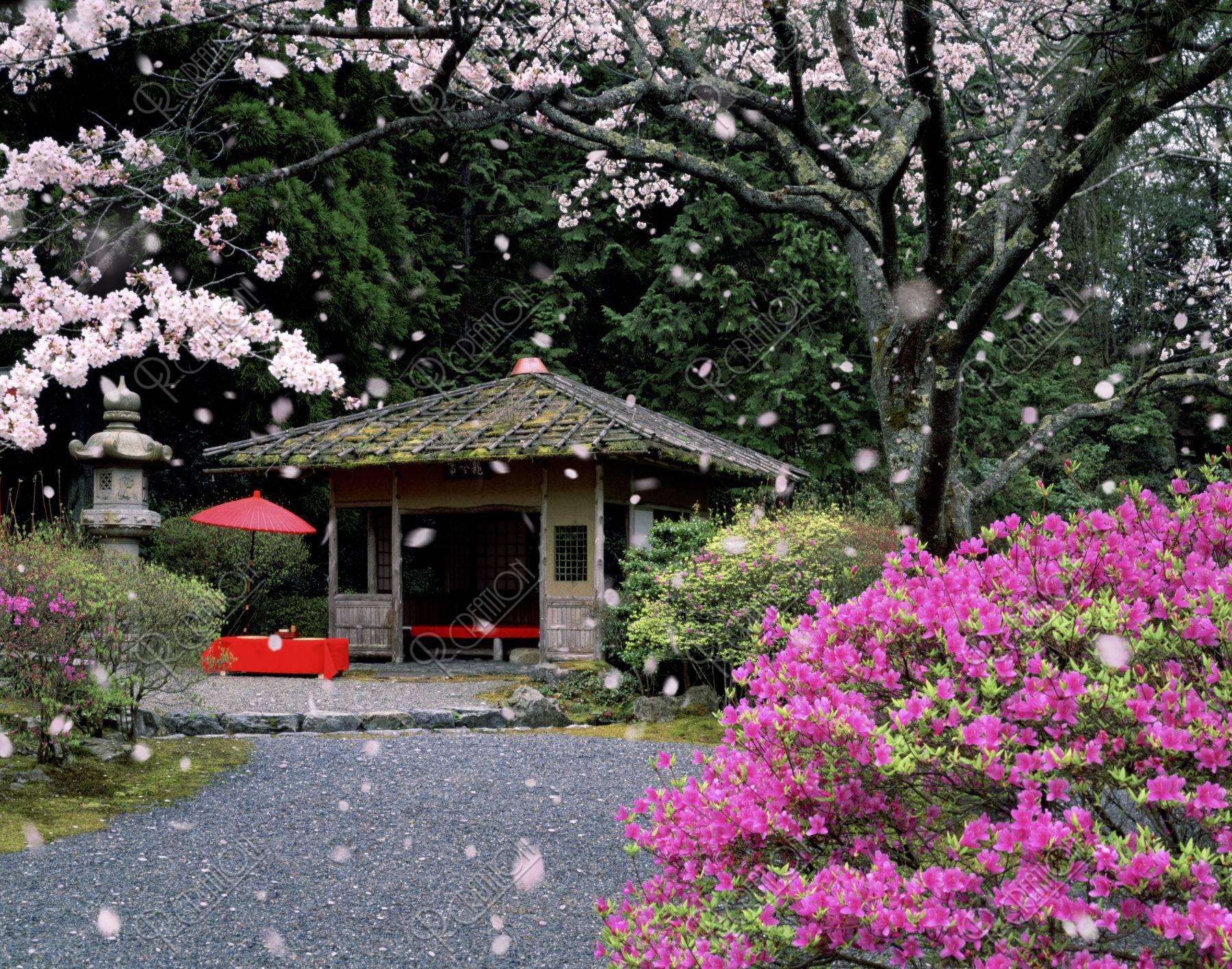 白龍園 庭園 桜 春 合成