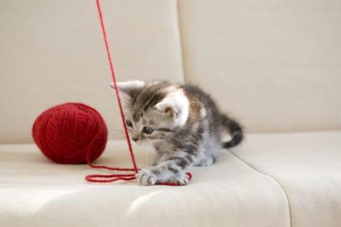 ネコ 仔猫 アメリカンショートヘア 毛糸玉