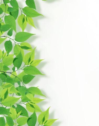グリーン 葉っぱ 新緑 合成 白バック