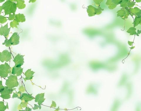 グリーン 葉っぱ ツタ 新緑 合成