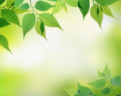 グリーン 葉っぱ 新緑 合成 アップ