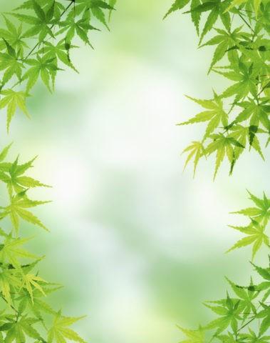 グリーン 青楓 葉っぱ 新緑 合成