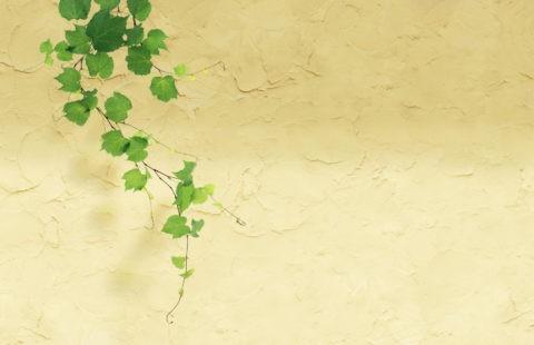 グリーン 葉っぱ ツタ 合成