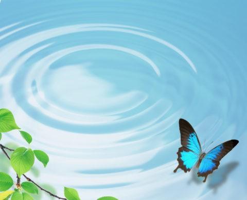 水面 波紋 蝶 オオルリアゲハ 合成