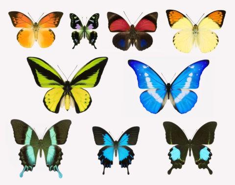 蝶 標本 昆虫 極彩色