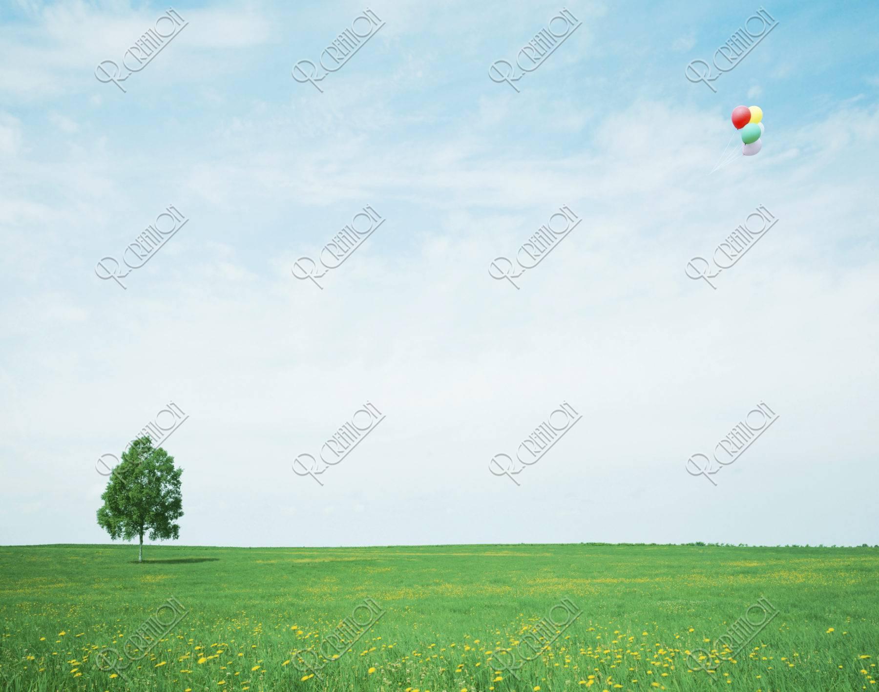 風船 草原 合成