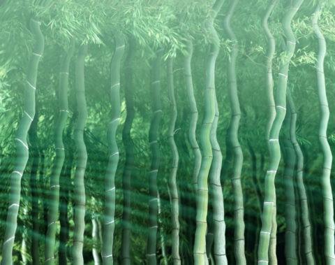 水面 竹 波紋 合成