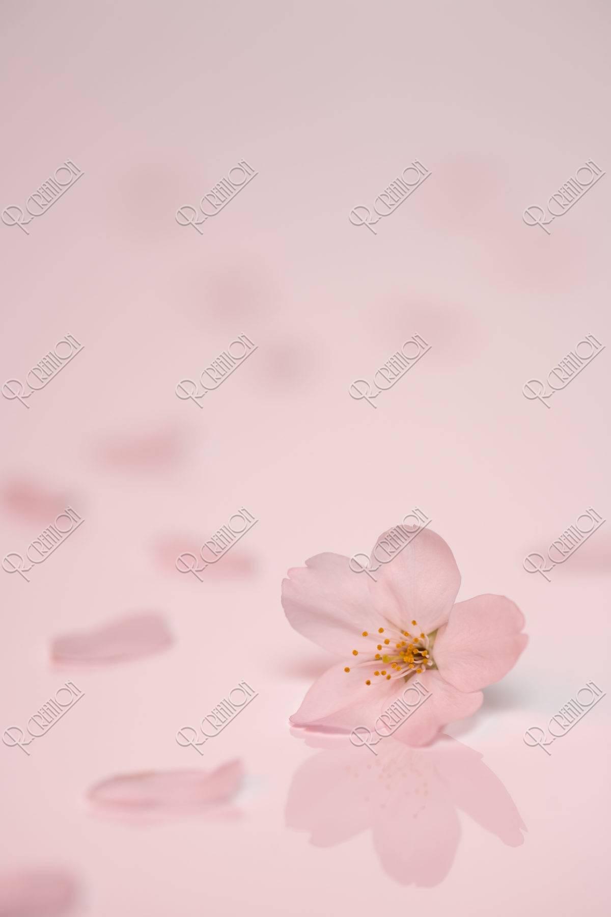 桜 花 散る
