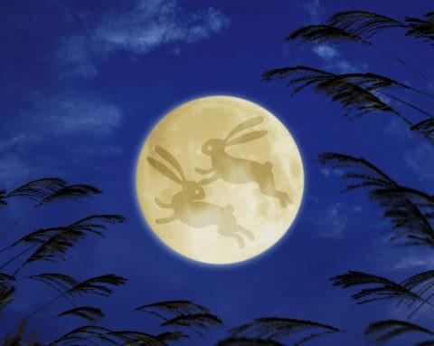 満月 ウサギ ススキ CG