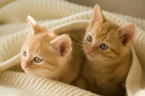仔猫 2匹