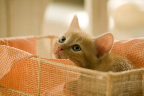 仔猫 かごの中