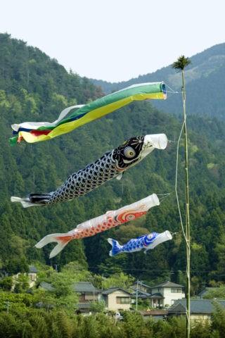 大原の鯉のぼり