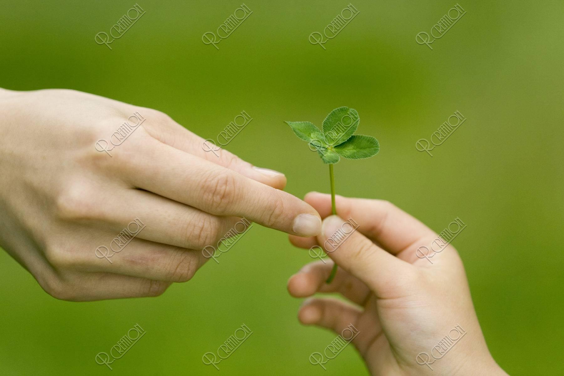 母と子の手 四つ葉のクローバー