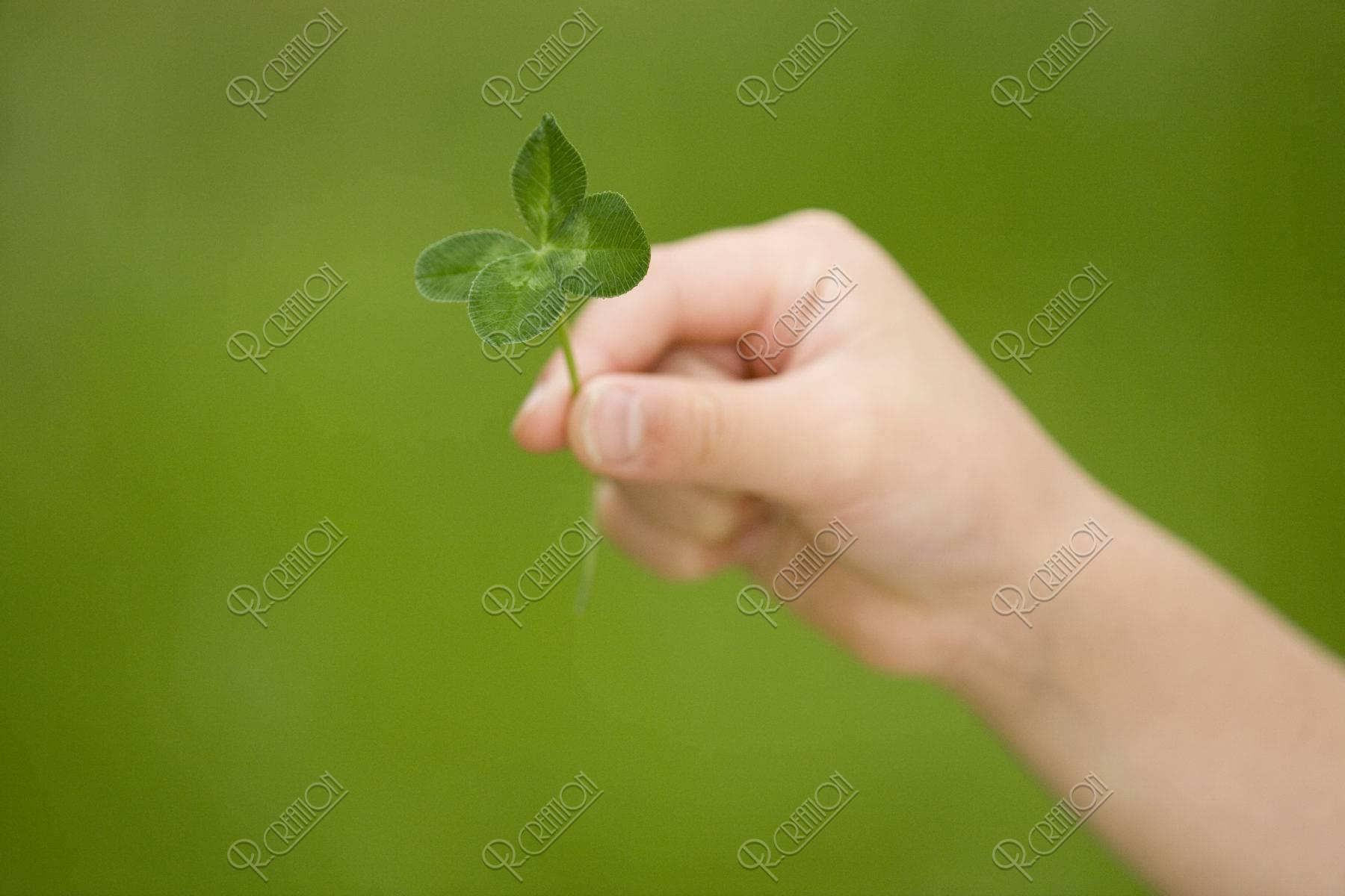 子供の手 四つ葉のクローバー