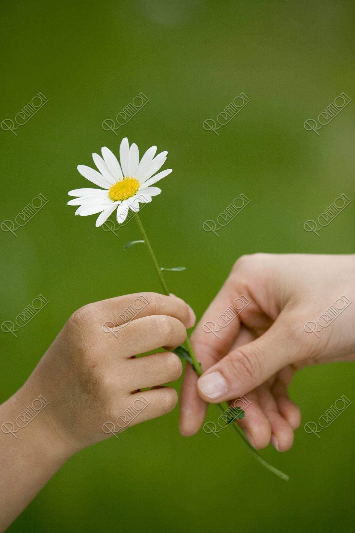 花を持つ親子の手
