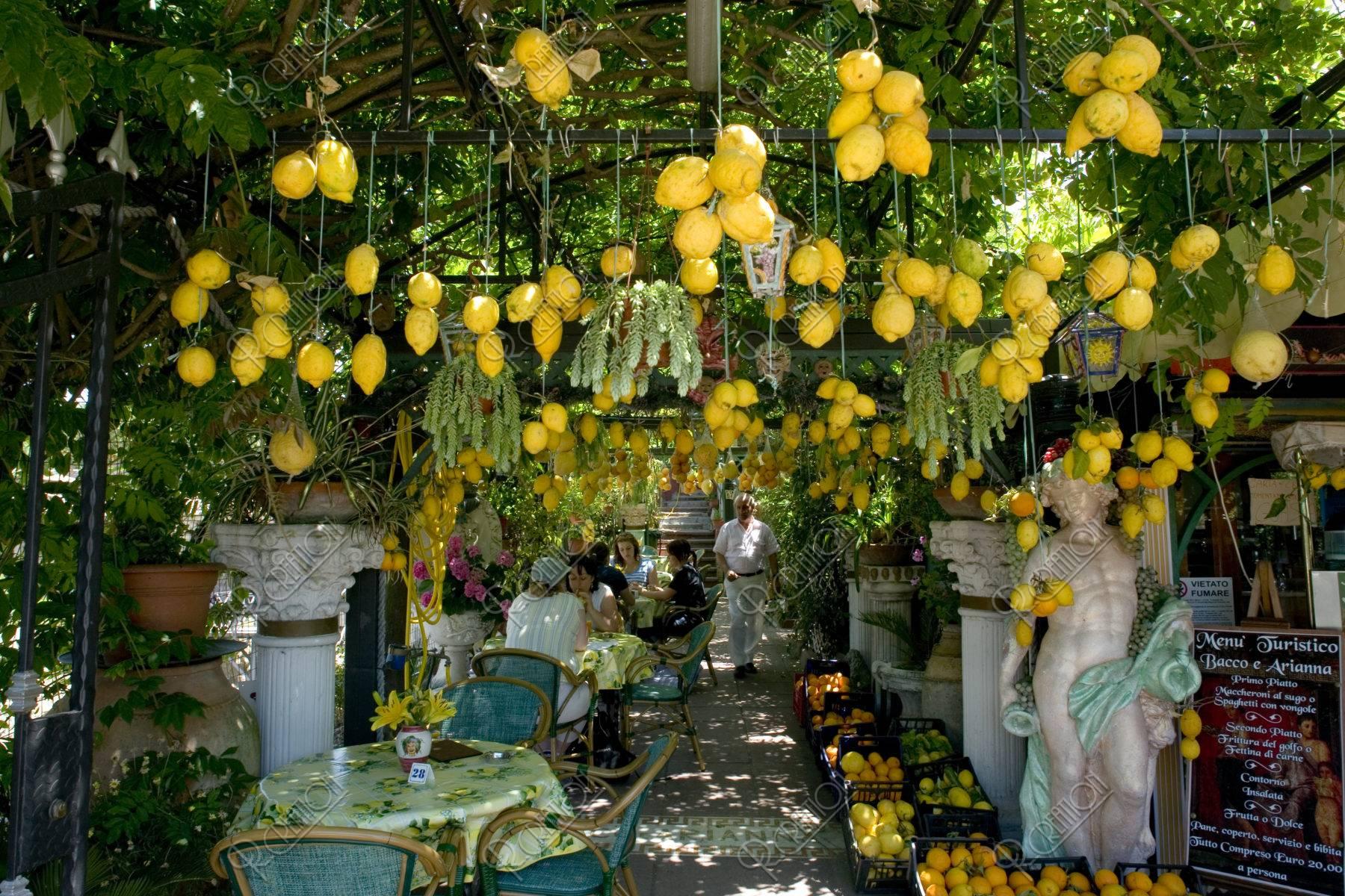 レモンのなるレストラン