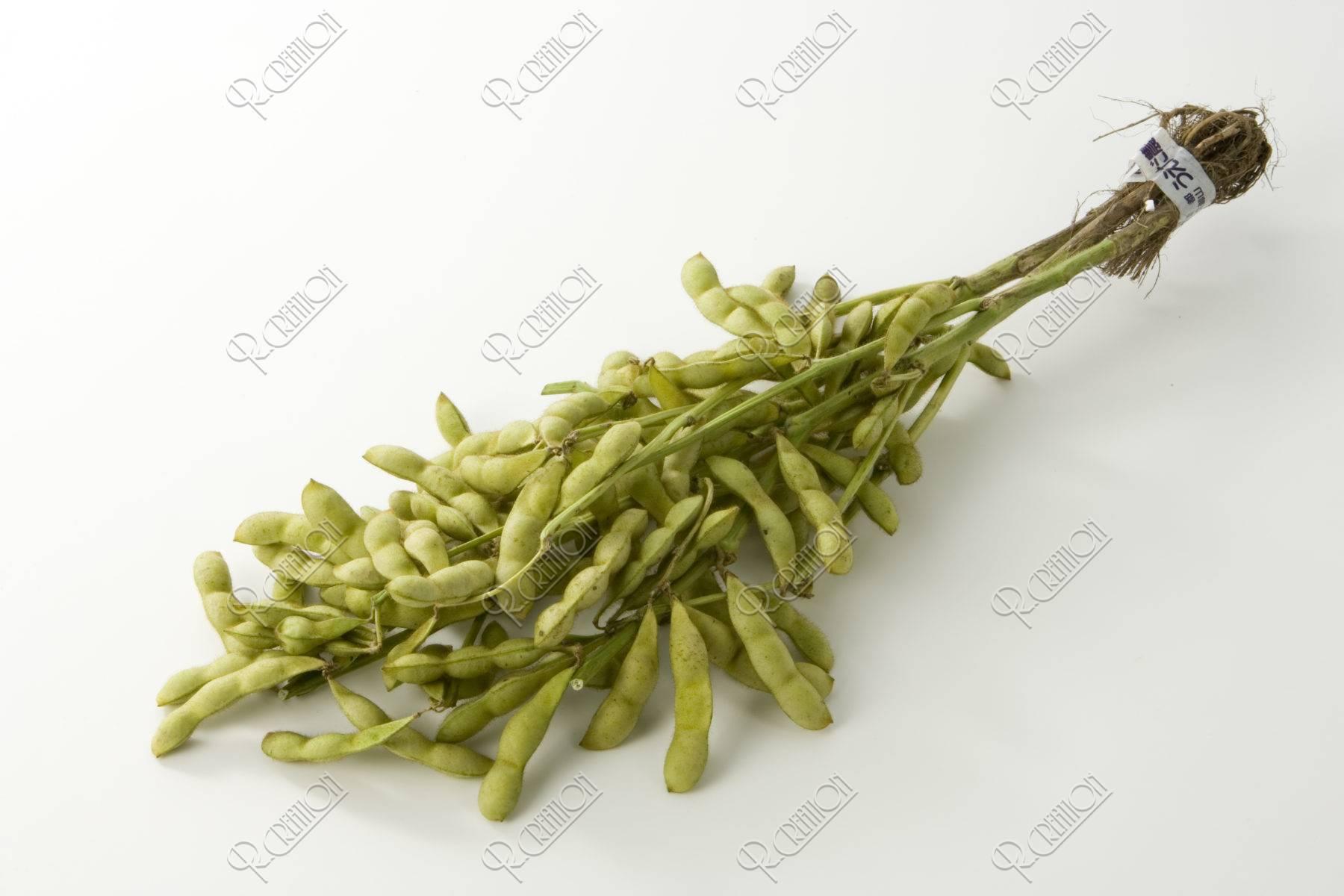 京野菜 丹波黒豆の枝豆