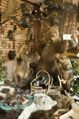 剥製毛皮の土産物店 ペトロパブロフスクカムチャッキー市