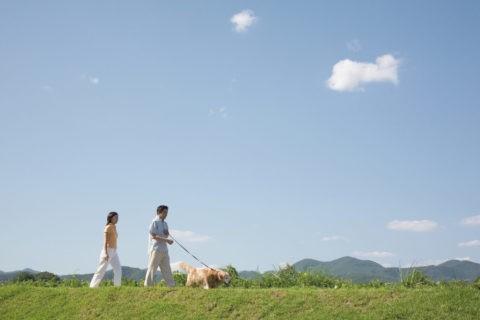 土手を散歩するカップルと犬