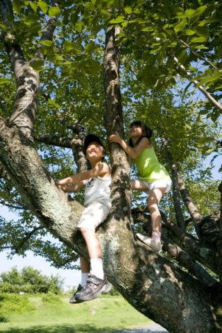 木登りをする姉弟