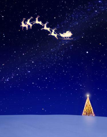 星空のクリスマスツリーとトナカイ CG