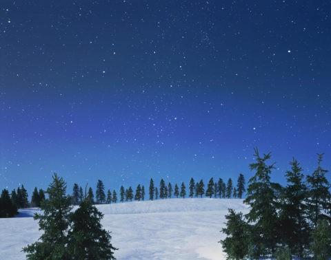 モミの木と雪原と星空 CG