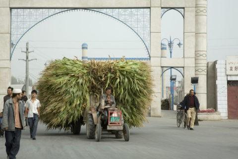 トウモロコシの運搬