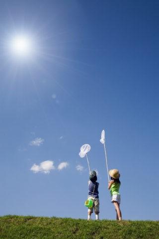 太陽と虫取り網を持つ姉弟