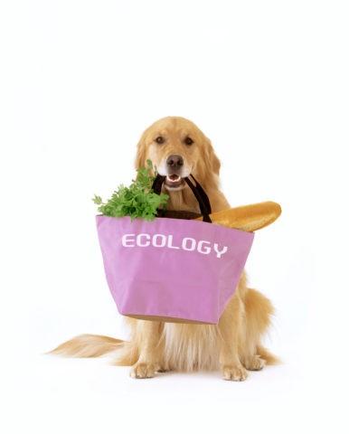 エコバッグと犬