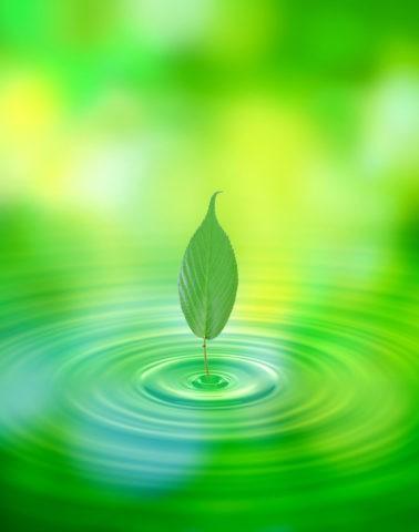 緑と葉と波紋