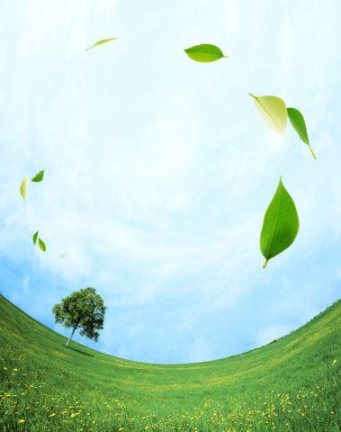 草原と空を舞う葉
