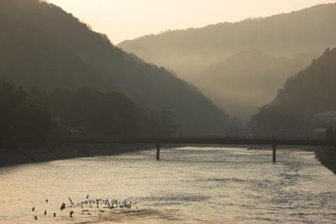 朝の宇治川と朝霧橋