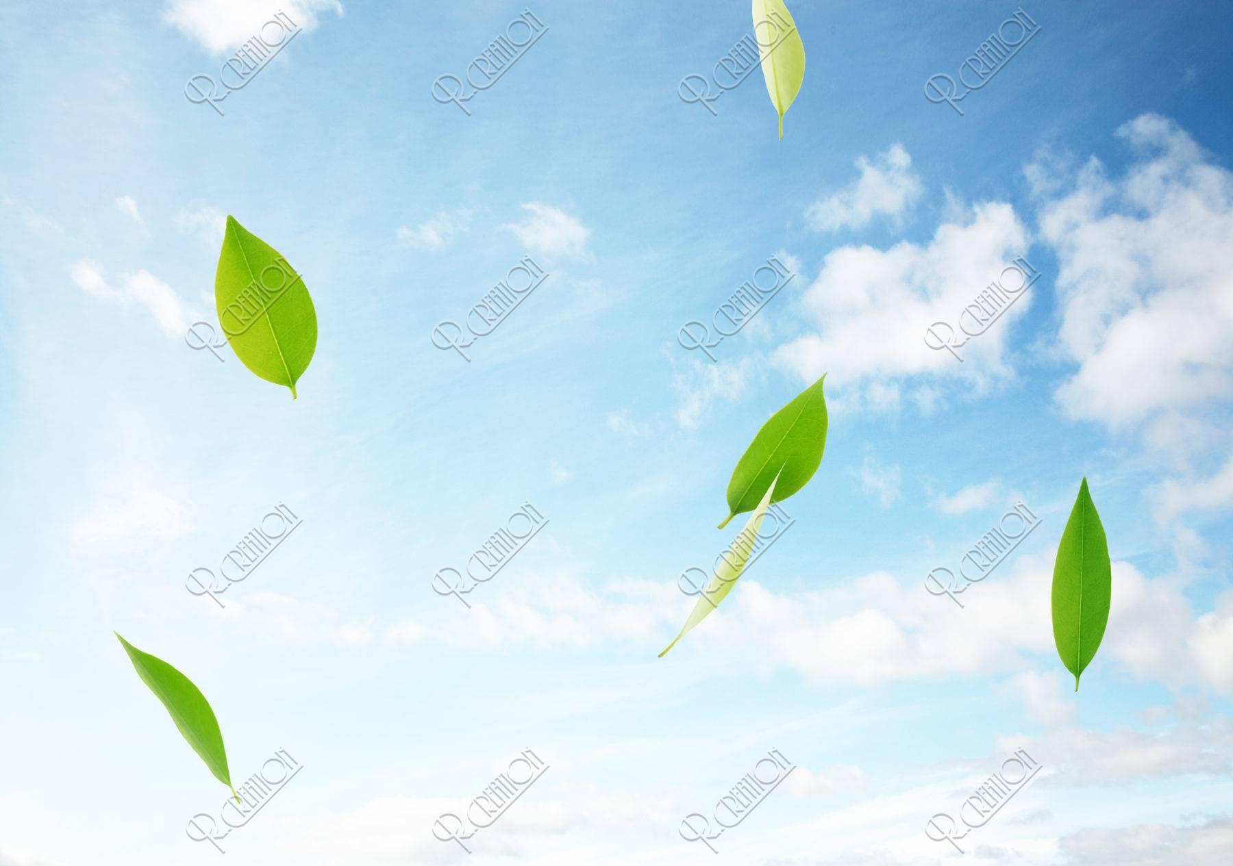 空に舞う葉っぱ