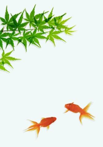金魚とカエデ