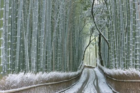 嵯峨野 竹林の道 雪景色
