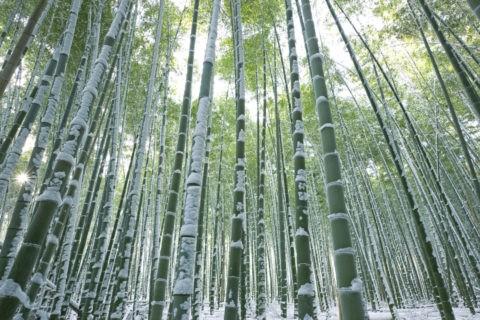嵯峨野 竹林 雪景色