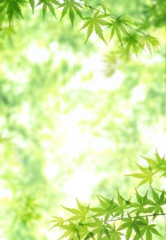 青楓のイメージ CG