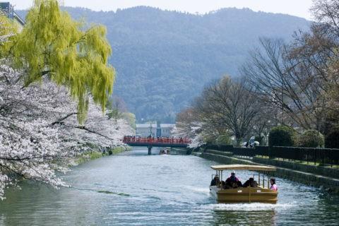 桜の岡崎疎水と桜回廊十石舟