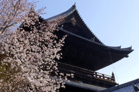 桜と南禅寺三門