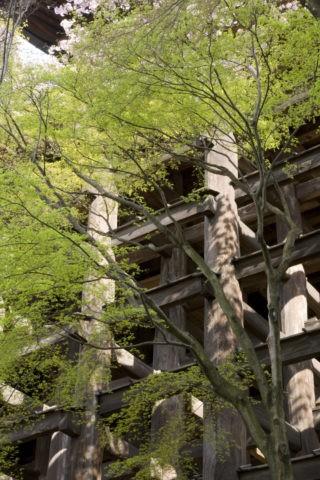 新緑と清水寺舞台足組 世界遺産
