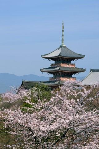 桜と清水寺三重塔 世界遺産