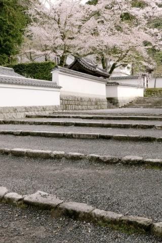 桜と南禅寺参道