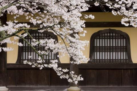 桜と南禅寺花頭窓
